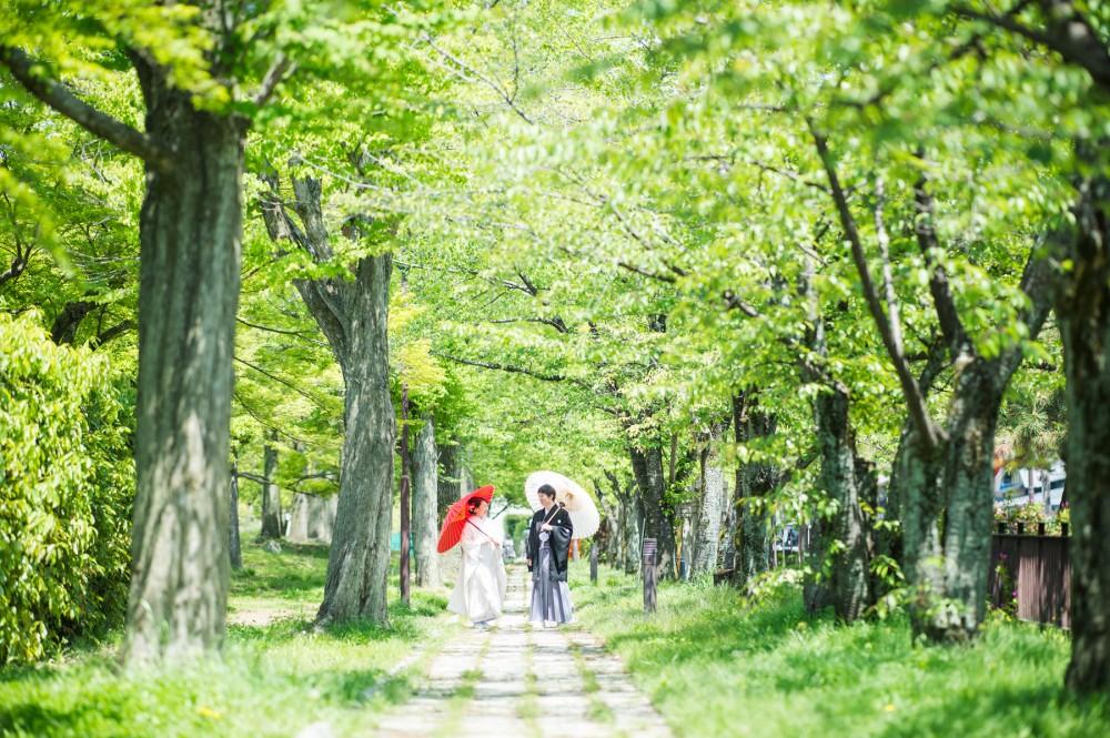 緑の回廊を白無垢姿で歩いています。