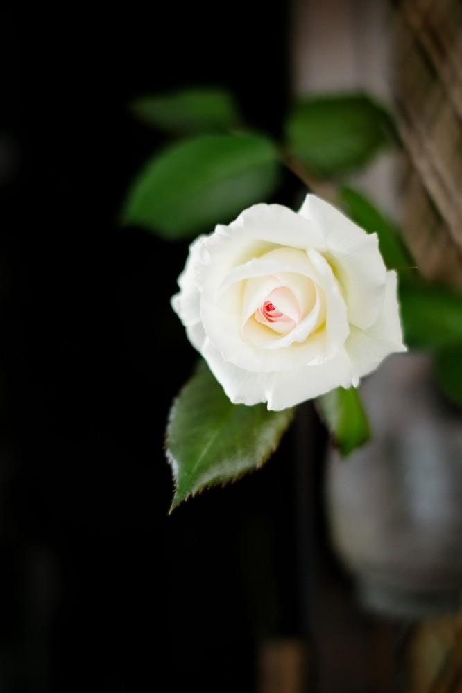 会社のバラの写真