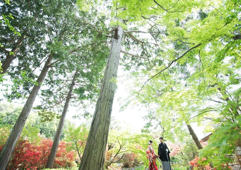 京都は右京区の神社での和装の撮影