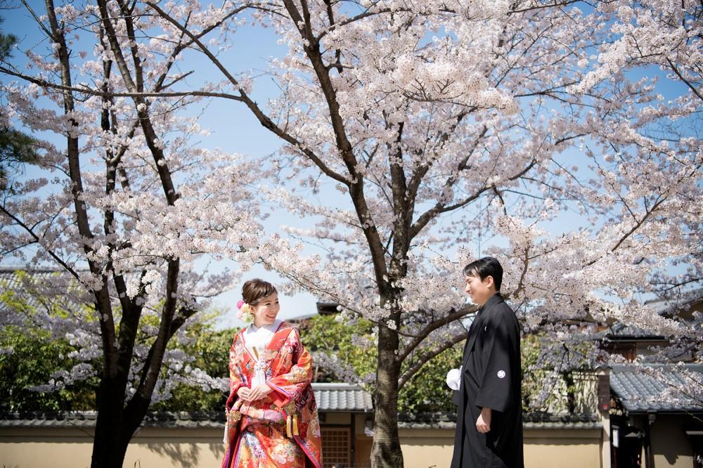桜と花嫁花婿さん