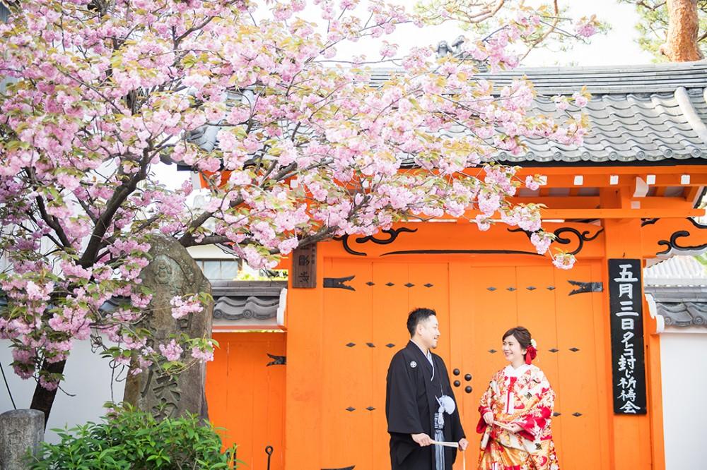 春の八重桜と和装の前撮り