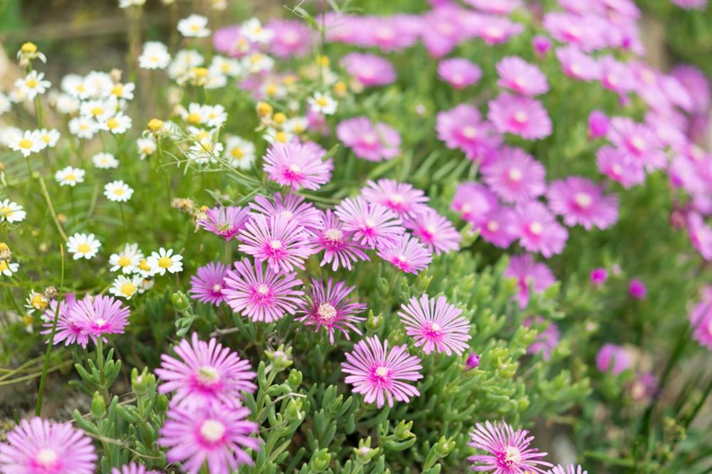 関西は大阪のお花