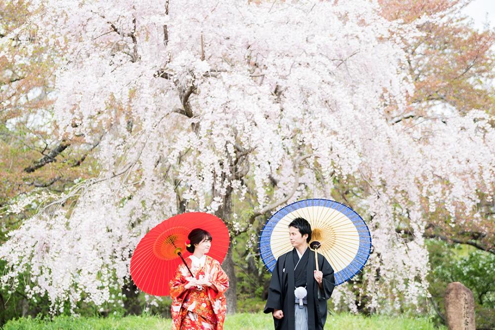 春の桜での和装前撮り撮影