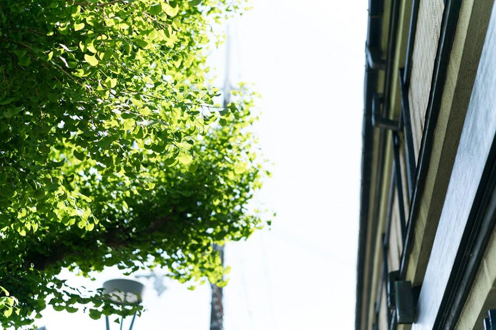 京都の緑の紅葉