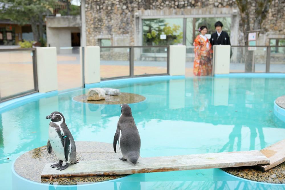 ペンギンと和装花嫁