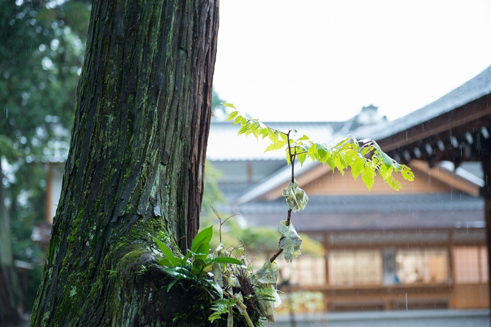 吉田神社の木